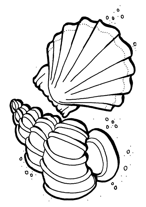 The-sea-shells