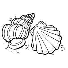 ocean shells coloring pages