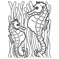 Seahorses Facing Each Other Coloring Page