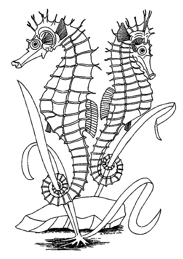 The-seahorses-facing-opposite-directions