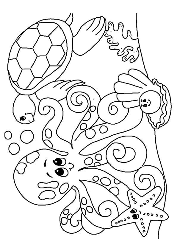 The-underwater-creatures