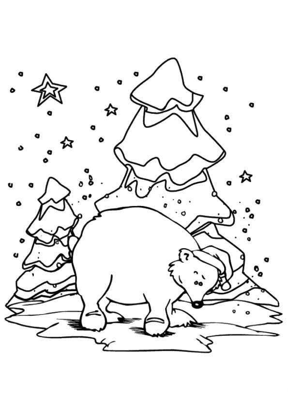 The-winter-polar-bear