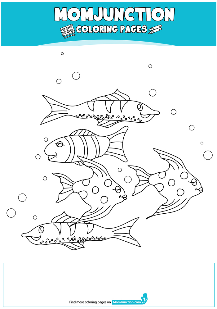Varieties-Koi-Fish-16