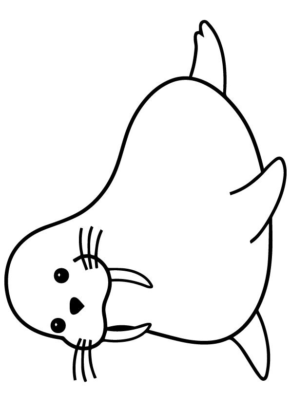 Walrus-Ocean-animal