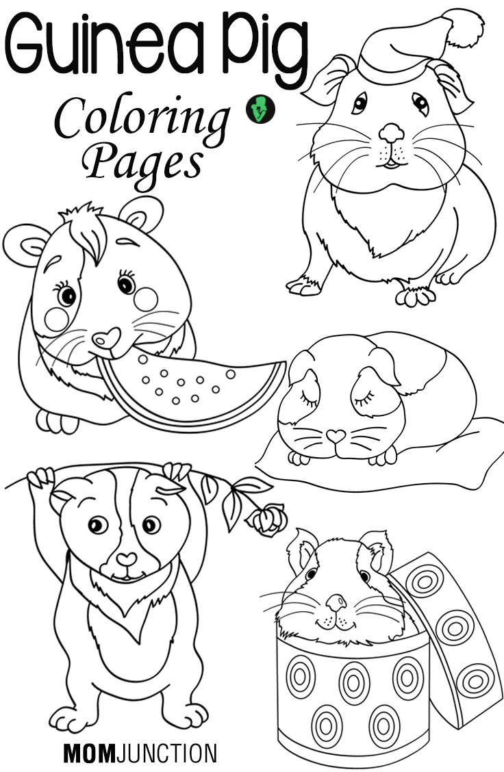 Free coloring pages guinea pigs - Free Coloring Pages Guinea Pigs 2