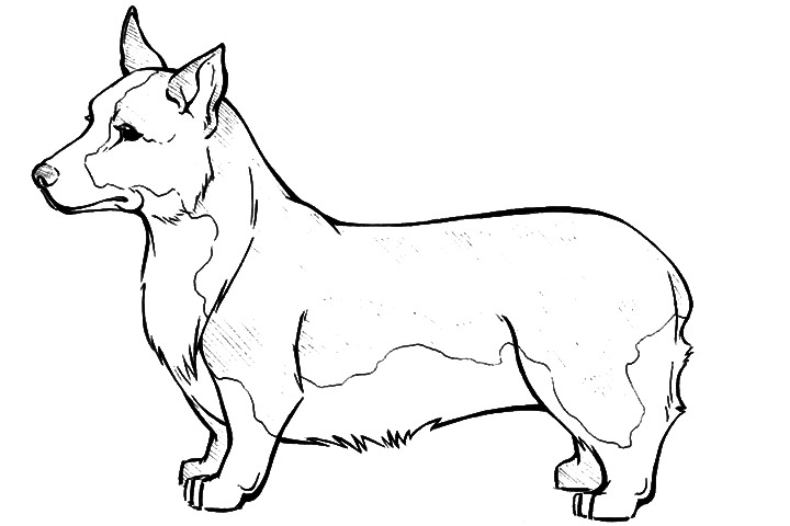 Pembroke Welsh Corgi Coloring Page Super Coloring Dog Corgi Coloring Pages
