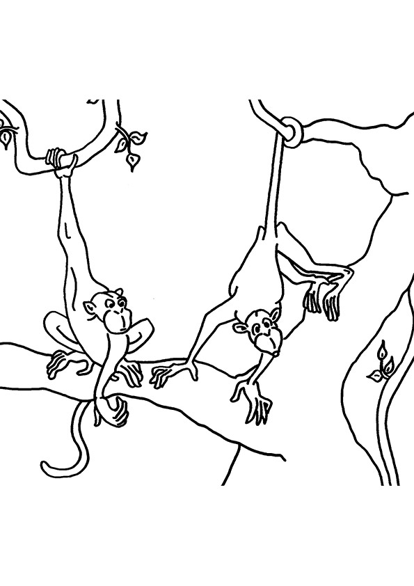 cpa-monkeys-on-tree