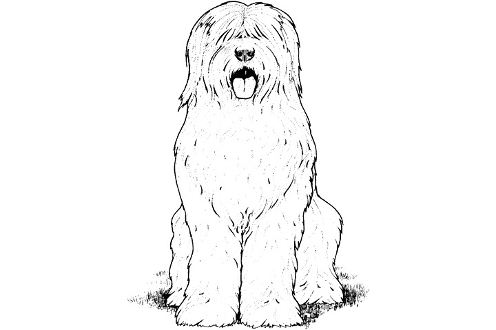 sheep dog coloring pages - photo#4
