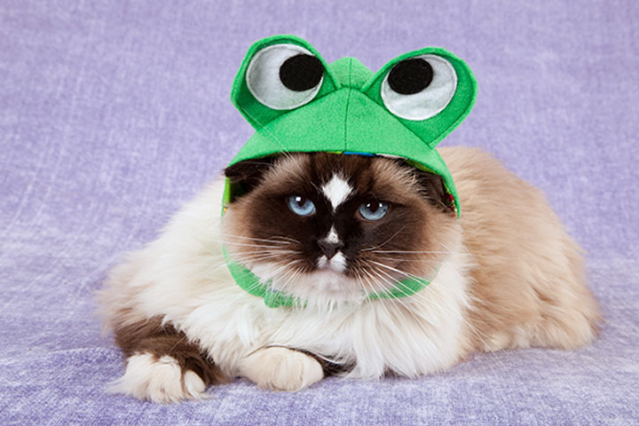 froggie baseball hat