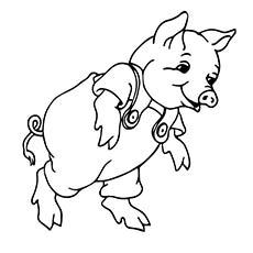guinea-pig--Runing