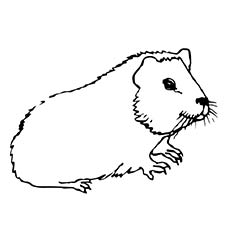25 Free Printable Guinea Pig Coloring Pages Online