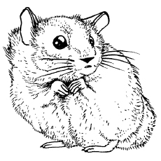 hamster-coloring-page