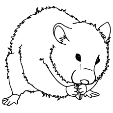 hamster coloring pages perfect