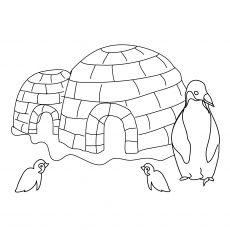 Igloo And The Penguin