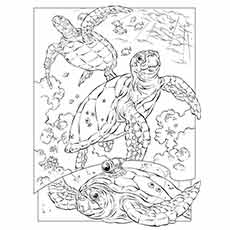 Dolphin Coloring Pages Latest Ocean Animals
