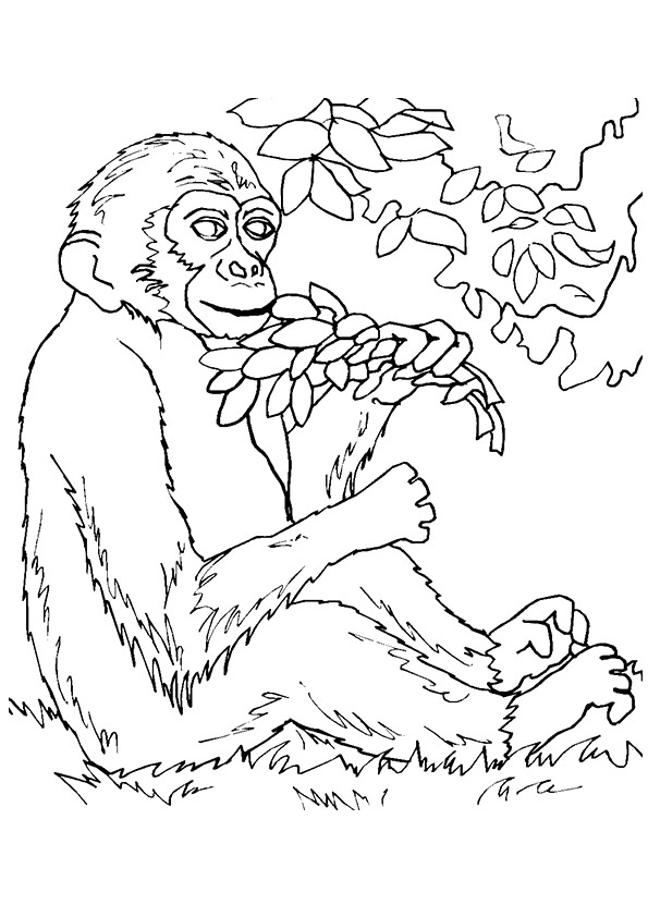 monkey-with-plants