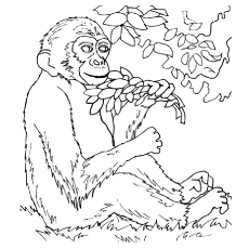 Monkey Eating Leaves Coloring Pages
