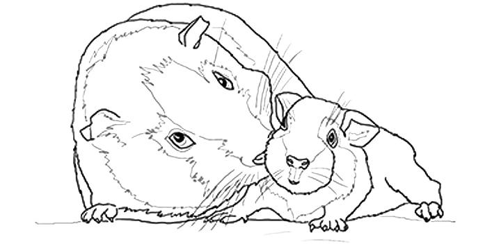 Guinea Pig Coloring Pages Guinea Pig Coloring pa