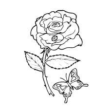Bug And Butterfly on Rose to Color Print