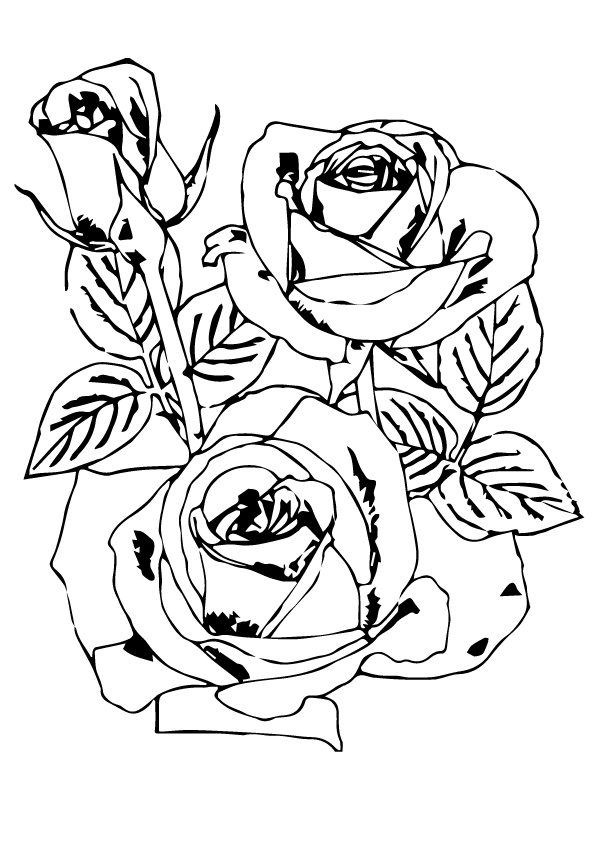rose-flowers