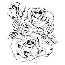 Rose flowers Sheet to Color