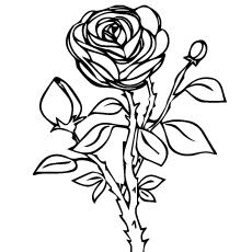 rose-nature
