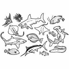 seaanimal 3 - Ocean Animals Coloring Pages