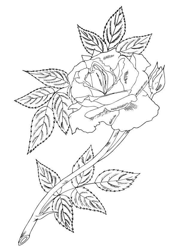 single-rose-with-leaves