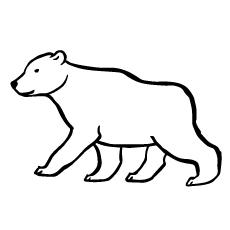 soft-bear