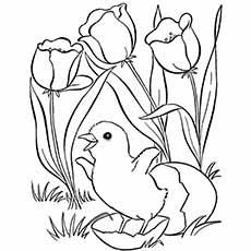 Coloring Sheet Of Spring Flower And Chick Coming Out Eagg