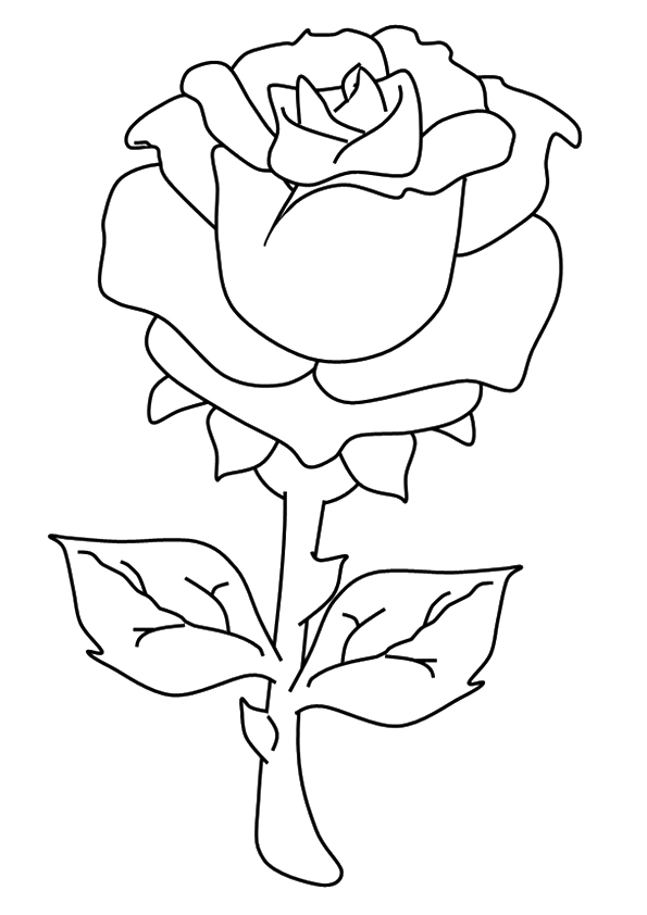 the-beautiful-rose
