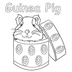 the-guinea-pig-in-a-box