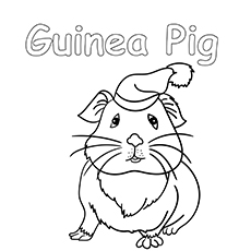 the-guinea-pig-with-a-lovely-hat