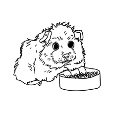 The Guinea Pig With Bowl of Food