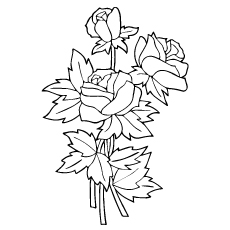 Three Roses Sketch to Color for Kids