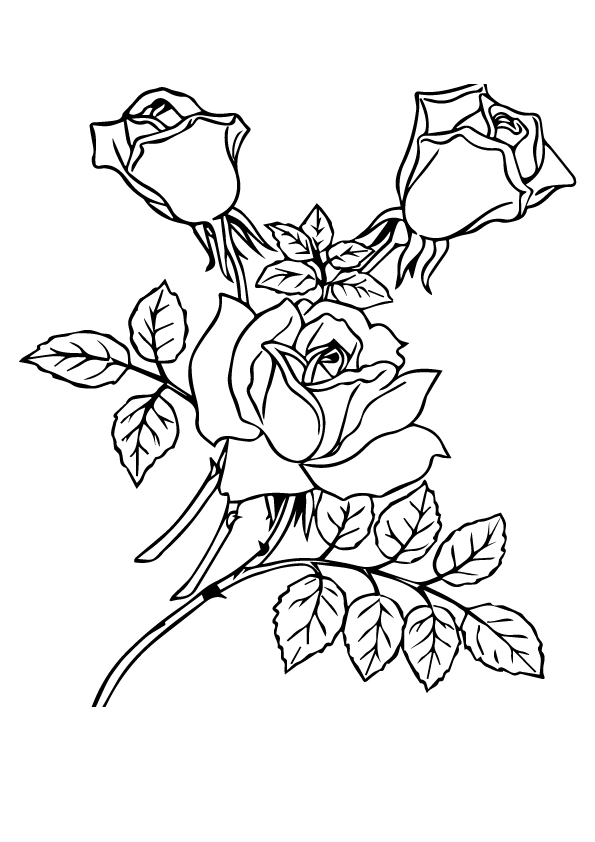 three-roses-with-leaves