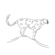 A-Best-Cheetah-Coloring-16