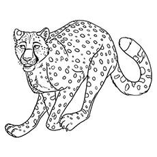 A Contemplating-Cheetah