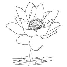 A-Lotus-Flower