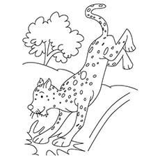 A Young-Cheetah