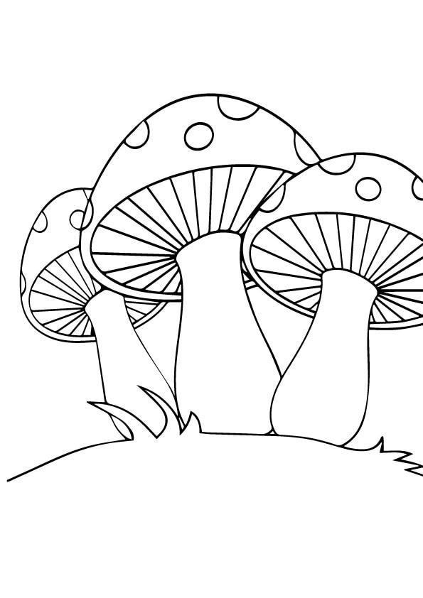 A-coloring-mushroom