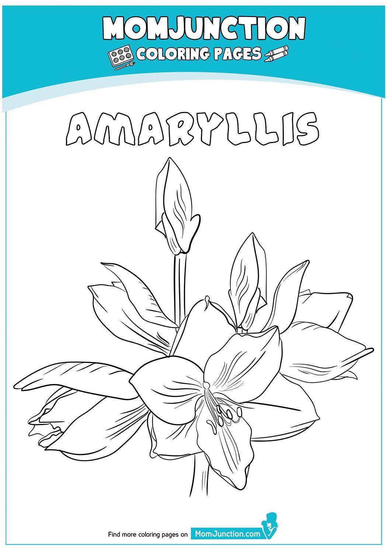 Amaryllis-18