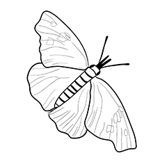 Coloring Page of American Snout Butterfly