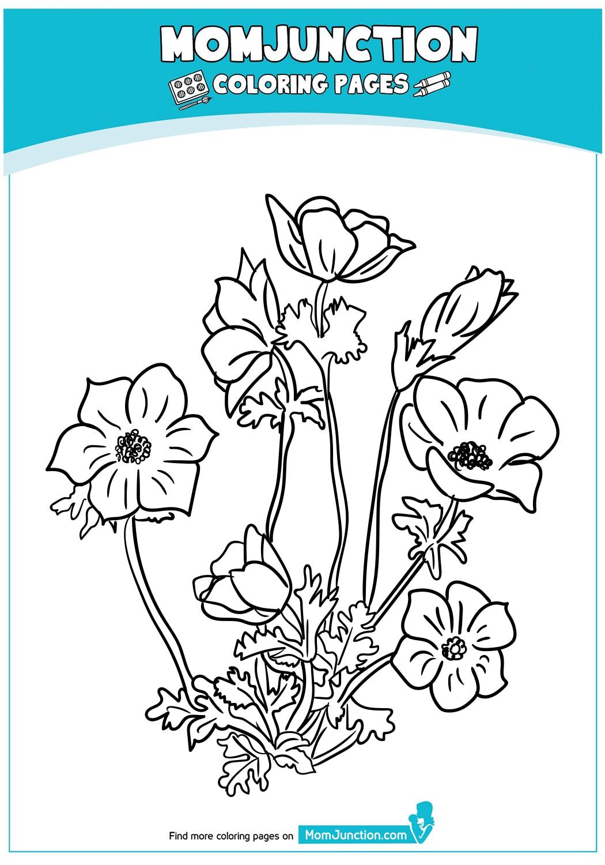 Anemon-Flowers