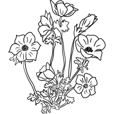Anemon Flowers