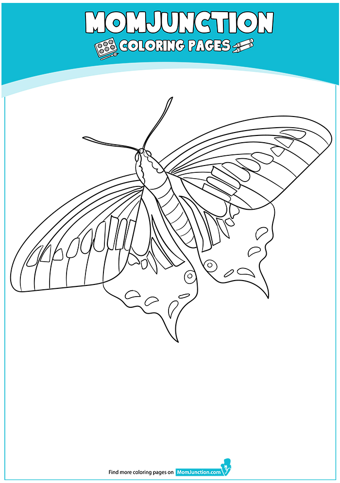 Anise-Swallowtail-17