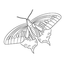 Anise Swallowtail to Color Free