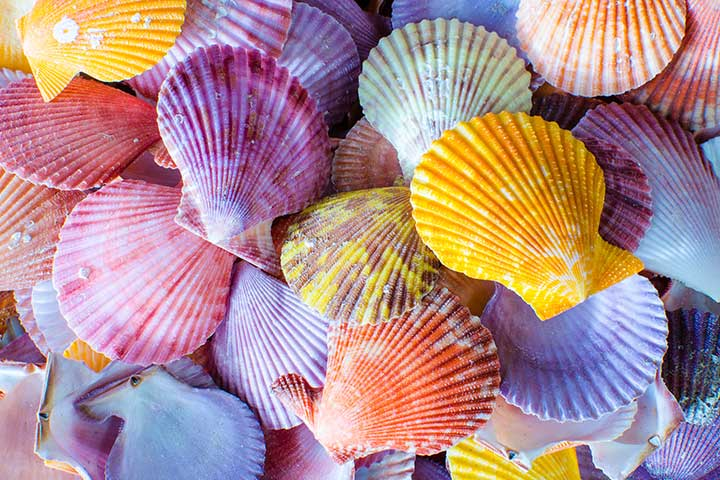 Fun Activities For Kids - Beach Shell Art