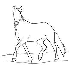Blue Roan Arabian Horse Coloring pages