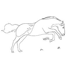 Bucking Mustang Horse Running Coloring Image